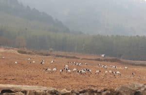 不丹黑颈鹤之旅