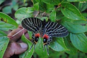 不丹蝴蝶之旅