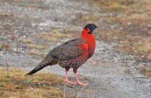 不丹鸟类摄影与观鸟